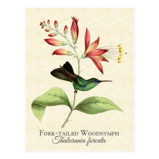 フォークによって後につかれる森の精のハチドリの芸術の郵便はがき ポストカード