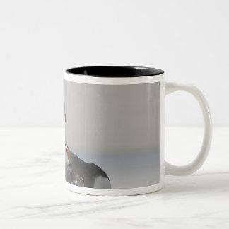 フォークランド諸国のサンダース島。 Gentoo ツートーンマグカップ