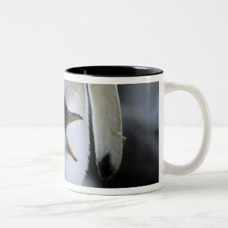フォークランド諸国。 Gentooのペンギンのひよこの隣の ツートーンマグカップ