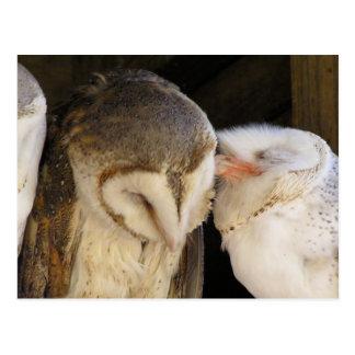 フクロウのキス! ポストカード