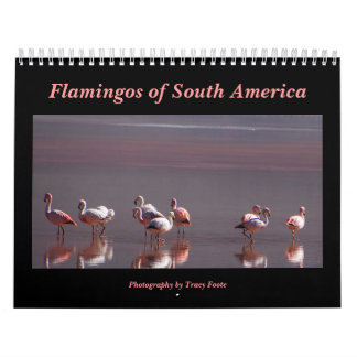 フラミンゴのカレンダー2017年-南アメリカの鳥 カレンダー