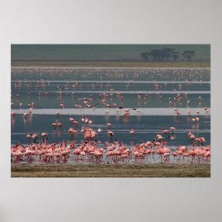 フラミンゴの収集-プリント ポスター