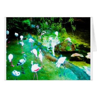 フラミンゴの天国 カード