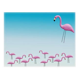 フラミンゴの群がること ポストカード