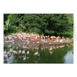 フラミンゴの群 カード