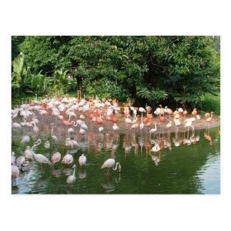 フラミンゴの群 ポストカード