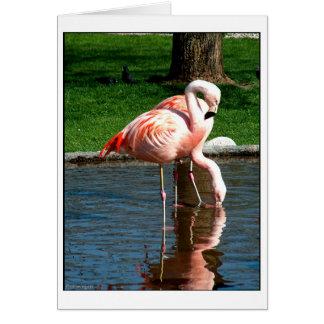 フラミンゴ カード