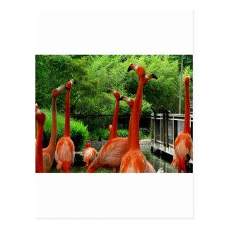 フラミンゴ ポストカード