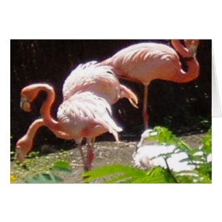 フラミンゴ(2) カード