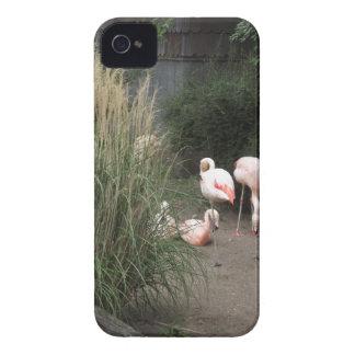 フラミンゴ Case-Mate iPhone 4 ケース