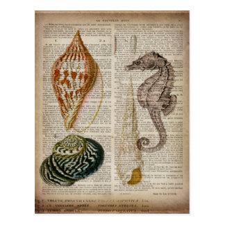 フランスのな国のヴィンテージの貝殻の植物のプリント ポストカード