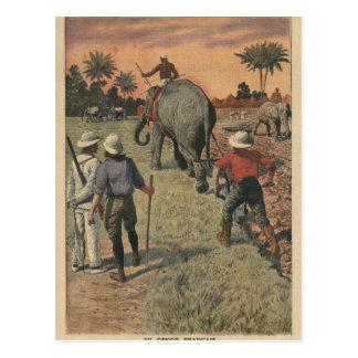 フランス語コンゴでは、象は耕すことに訓練しました ポストカード