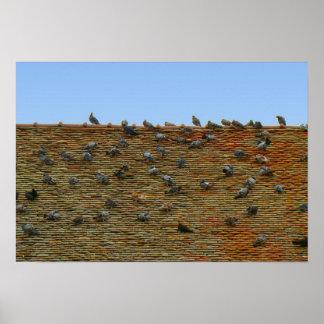 フランス、ジュラ、Arboisの屋根のハト ポスター