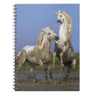 フランス、Bouches DUローヌの自然な地方公園 ノートブック