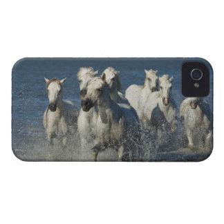フランス、Camargue。 河口4を通して走られる馬 Case-Mate iPhone 4 ケース