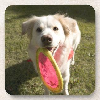 フリズビーを持つ犬 コースター