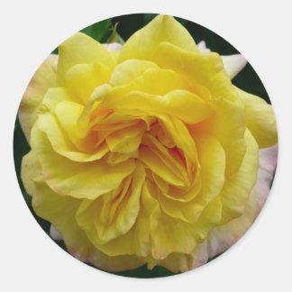 フリルが付いた黄色バラ ラウンドシール