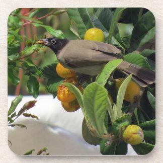 フルーツでsnacking鳥 コースター