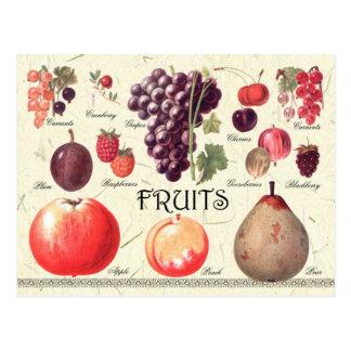 フルーツのイラストレーション ポストカード