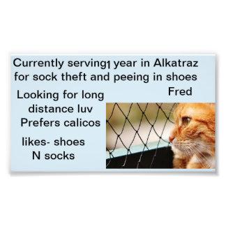 フレッドオレンジ虎猫猫の写真のプロフィール フォトプリント