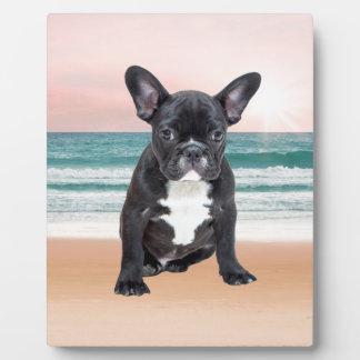 フレンチ・ブルドッグのビーチの日曜日かわいい水 フォトプラーク