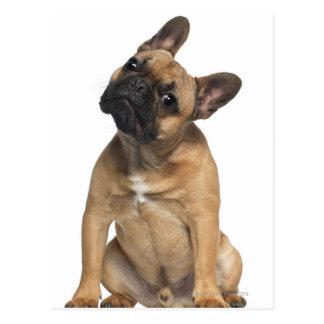 フレンチ・ブルドッグの子犬(7か月古い) ポストカード