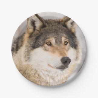 フレンドリーなオオカミの微笑の紙皿 ペーパープレート