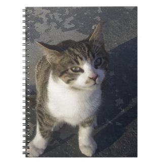 フレンドリーな子ネコ ノートブック