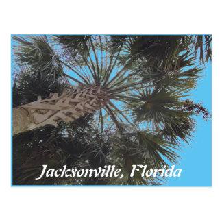 フロリダのビーチの郵便はがき-ヤシの木 ポストカード