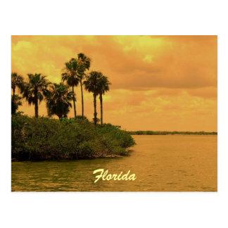 フロリダのヤシの木の幻想 ポストカード