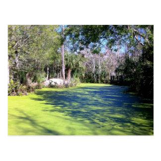 フロリダの川の荒野 ポストカード
