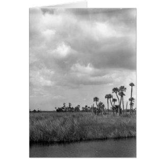 フロリダの沼沢地の沼地ヴィスタ、1962年7月 カード