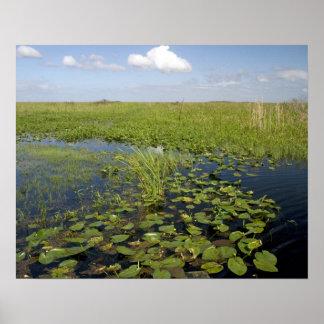 フロリダの沼沢地2のスイレンそしてsawgrass ポスター
