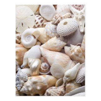 フロリダの海の貝の背景-ビーチはカスタムを殻から取り出します ポストカード