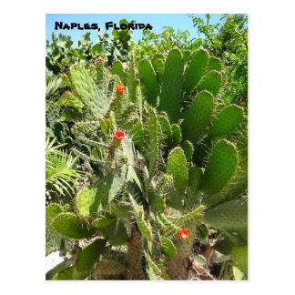 フロリダの腕木信号機のサボテンのナポリの植物園 ポストカード