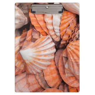 フロリダの鍵、Key Westの貝殻 クリップボード