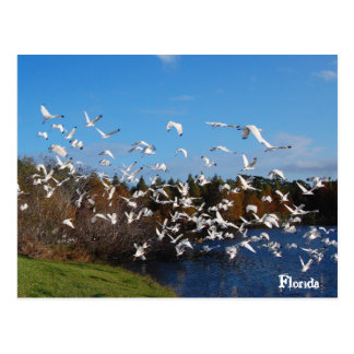フロリダの鳥 ポストカード