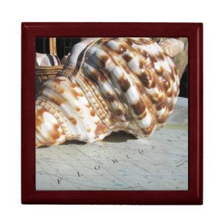フロリダ湾の海の貝の装身具箱 ギフトボックス