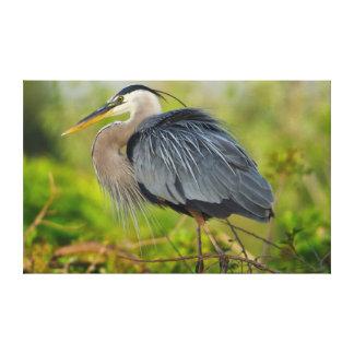 フロリダ、ベニスの素晴らしい青鷲の育成 キャンバスプリント