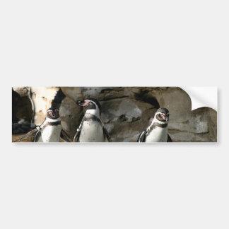 フンボルトのペンギン バンパーステッカー