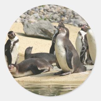 フンボルトのペンギン ラウンドシール