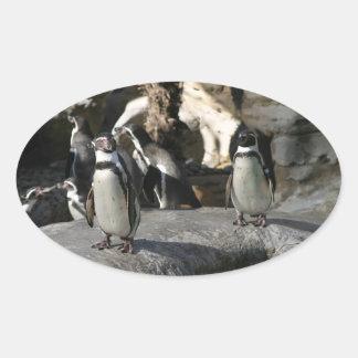 フンボルトのペンギン 楕円形シール