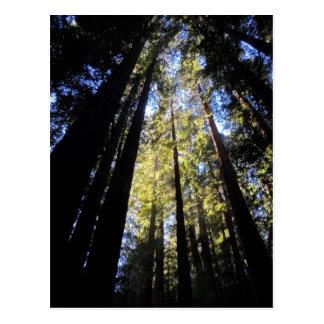 フンボルトのレッドウッドの州立公園 ポストカード