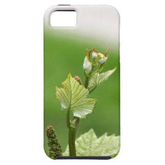 ブドウつる植物の新しい芽 iPhone SE/5/5s ケース