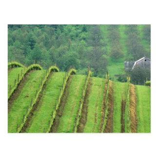 ブドウのブドウ園はNewbergオレゴンに近づきます ポストカード