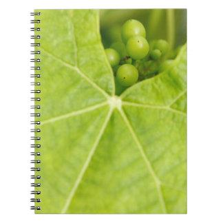 ブドウの成熟 ノートブック