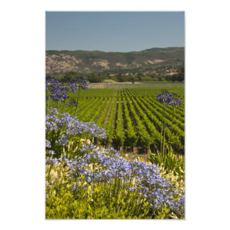 ブドウ園および紫色の花 フォトプリント
