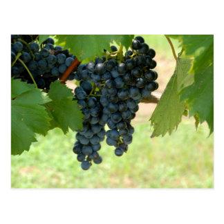ブドウ園のブドウ ポストカード