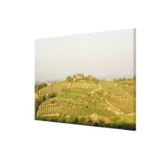 ブドウ園の高角の眺め、シエナの地域、 キャンバスプリント