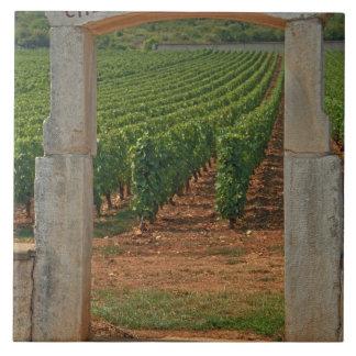 ブドウ園への石造りの柱廊玄関 タイル